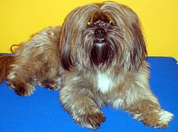 Rio - the Day Trading Tutor Dog
